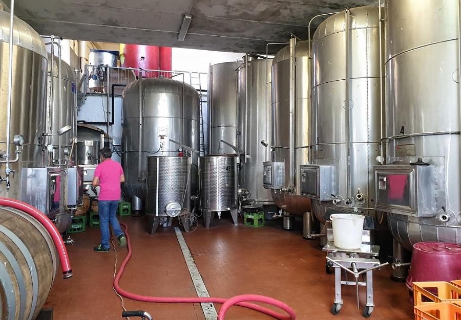 visita azienda agricola vinicola a piacenza e dintorni_la conchiglia di claudio terzoni