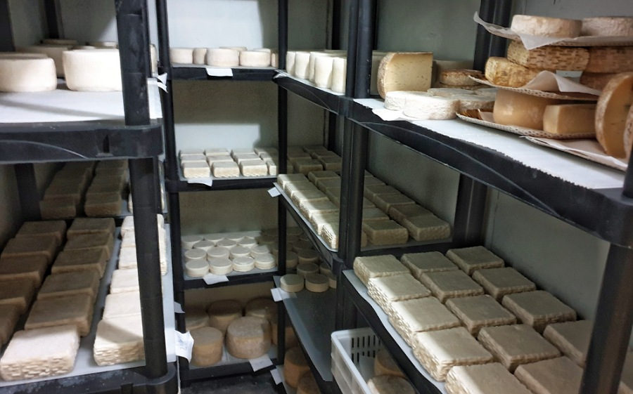visita azienda casearia capriss formaggi di capra