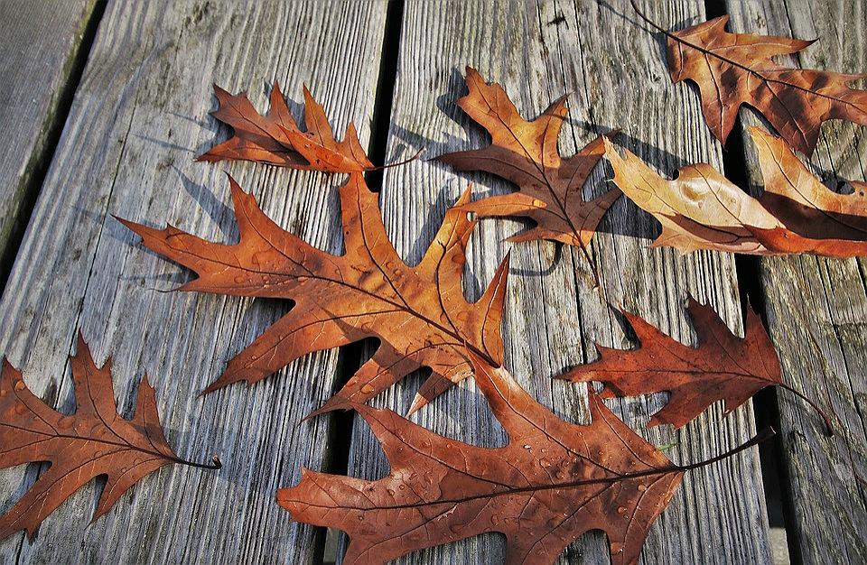 foglie autunnali durante una passeggiata