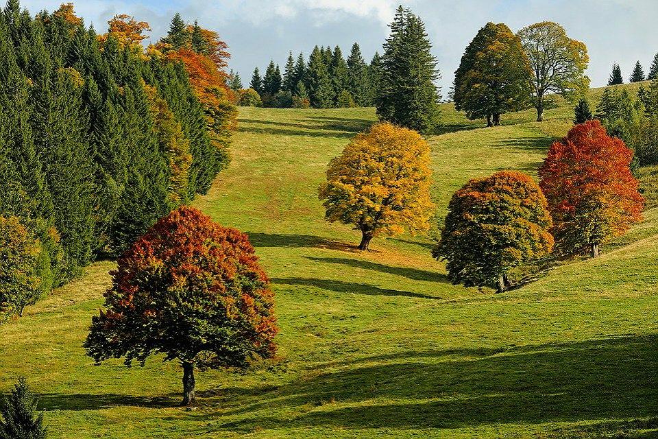 boschi con colori dell'autunno in lombardia
