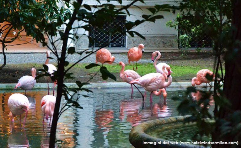 flamingos in milan_villa invernizzi_walking path