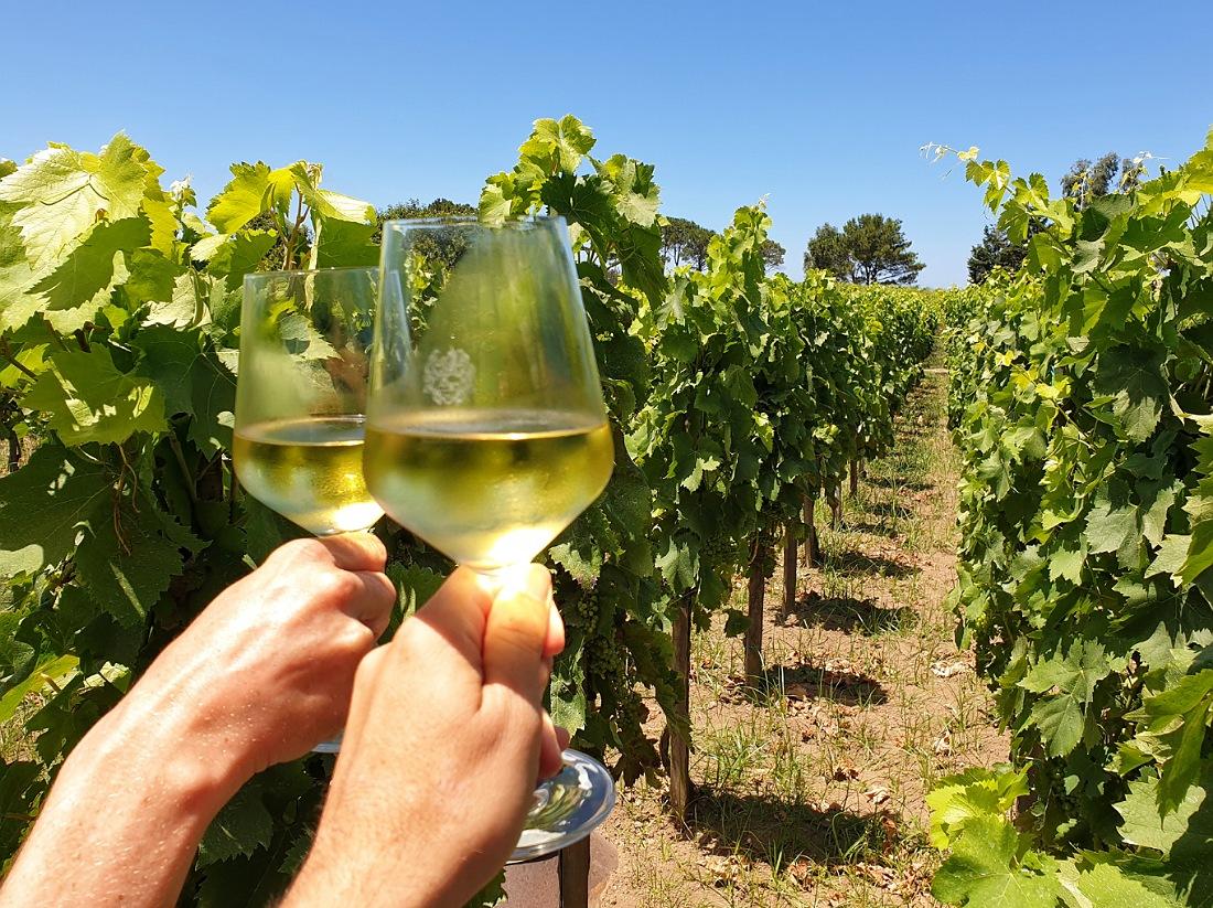 Degustazione di vini alla Tenuta di Castellaro sull'isola di Lipari_cosa fare_Eolie